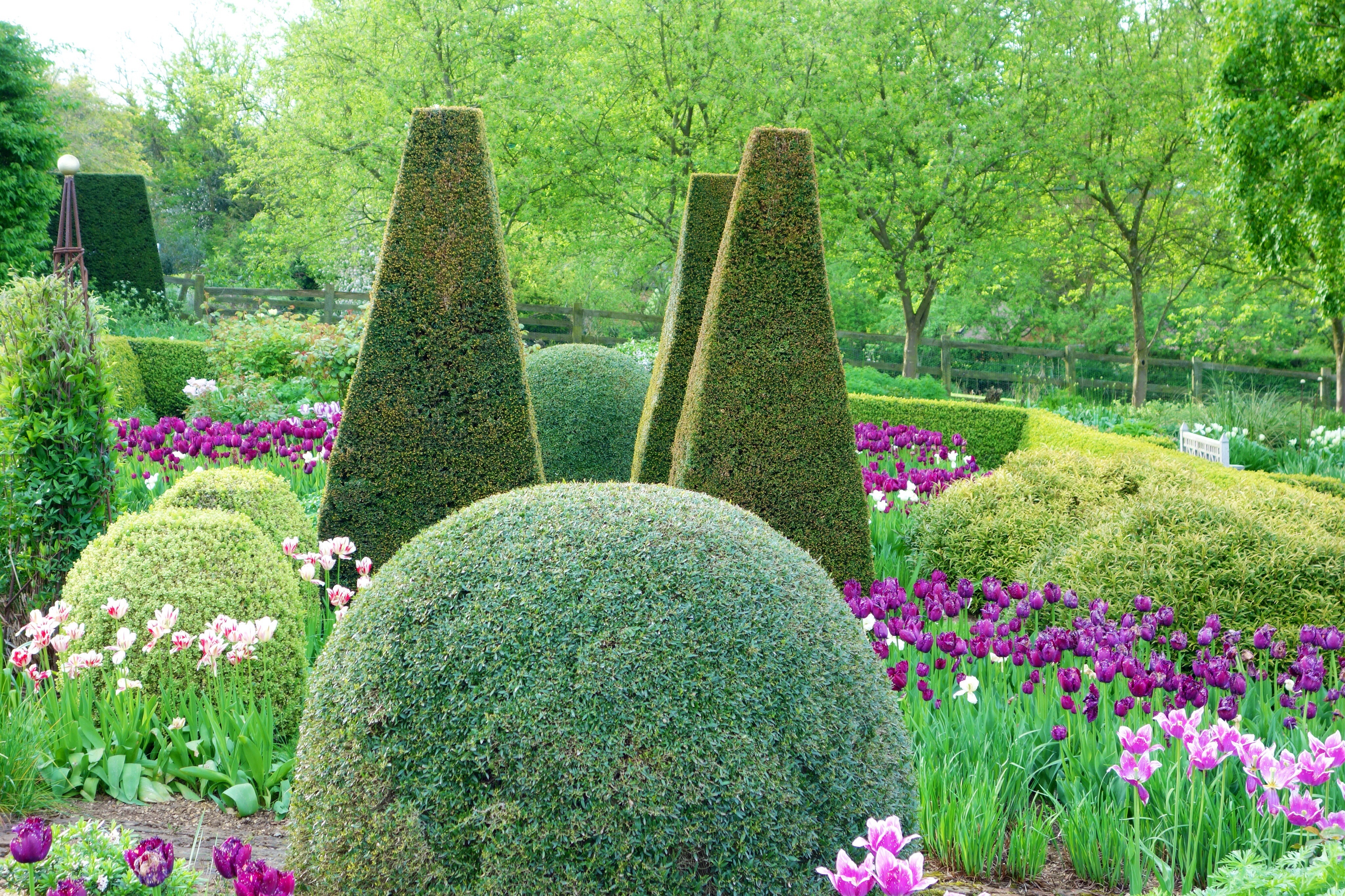 Plant ot the month april pettifers garden blog - Vegetable garden what to plant in april ...