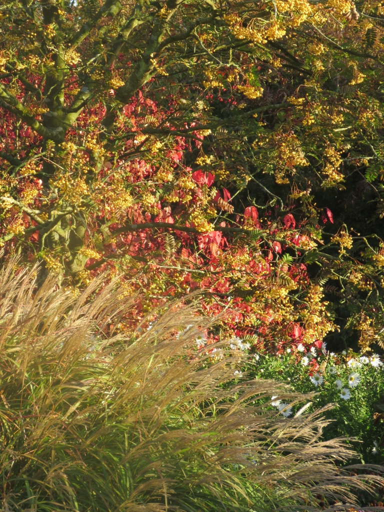 Autumn border